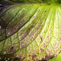 Veins of a leaf. von Ruth Baker