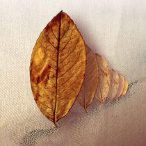 Allee der braunen Blätter von Manfred Schmidt