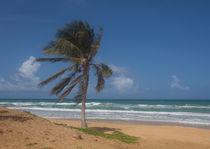 Karon Beach palm tree by Leighton Collins
