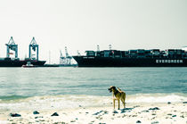 Hund in Hamburg by Gabriele Brummer