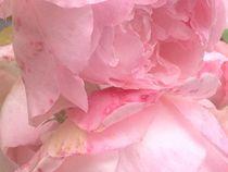Blütentraum von Nona Simakis