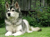 ~ Personality Dog ~ von Sandra  Vollmann