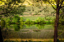 Vineyards reflecting in the moselle river von 7horses