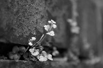 Mauerblümchen von crazyneopop