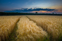 zum bett im kornfeld by Manfred Hartmann