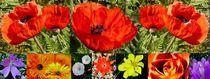 Blumencollage von Eberhard Schmidt-Dranske
