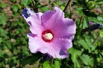 purple flower von feiermar