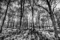 The Monochrome Forest von David Pyatt