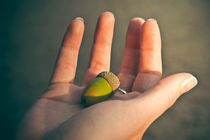 Life into the Palm of your Hand von loriental-photography