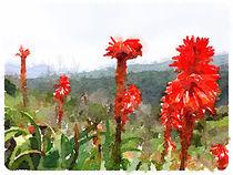 Rote Blütensignale im Garajonay von leoncanarias