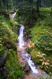 Schmaler Wasserfall im Schwarzwald von Sabine Radtke