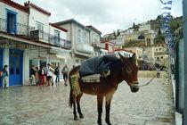 Esel im Hafen auf Hydra by Sabine Radtke