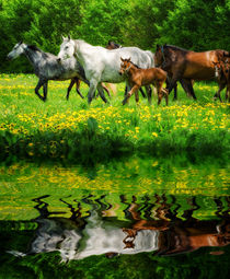 Herd of warmblood horses mirroring by paganin