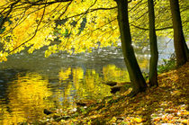 deciduous forest in sunlight at a river by paganin