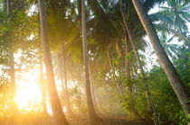 tropical palm trees in morning fog with sunrise von paganin
