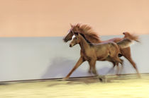 Panning and blurred motion - Horses in speed by paganin