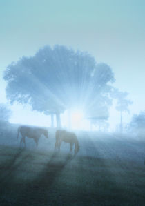 grazing horse in mystic foggy morning light by paganin