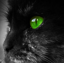 cat with green eyes by paganin