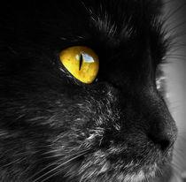 cat with yellow eyes von paganin