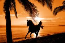 galloping horse in sunlight on beach von paganin