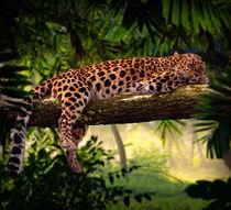 Leopard sleeping in jungle von paganin