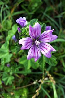 Purple-flower-3-bun