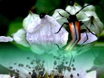 ein käfer... von hedy beith