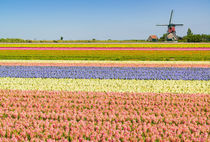 Ultimate Netherlands