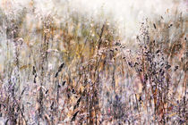 Grasses In The Afternoon Light von florin