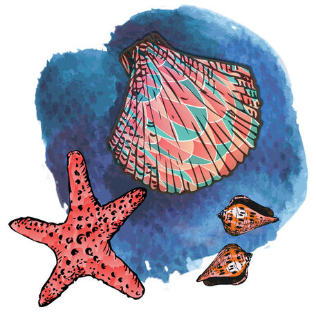 """seashells and starfish"" grafik/illustration als poster"