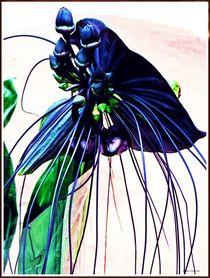 '~ Fledermausblüte ~' by Sandra Vollmann