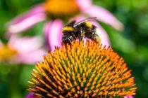 Auf der Suche nach Pollen von Sebastian Hocke