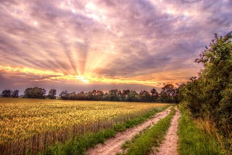 Sunset-field-0638