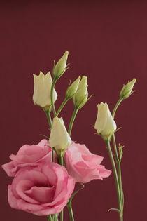 Blütenpracht by Gisela Peter