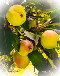 Crabapples    by Mary Lee Parker