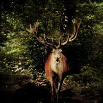 Hirsch im Wald by Sandra Kaltofen