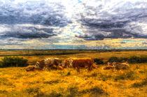 Resting cows Art von David Pyatt