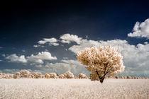 Baum in Infrarot by airde