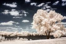 Baum in Infrarot von airde