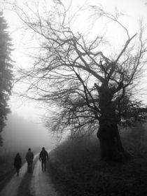 Einsam im Nebelwald von airde