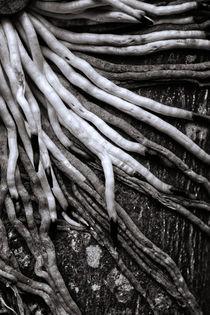 Wurzeln / Roots von zookie-miller
