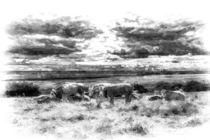 Resting Cows Art by David Pyatt