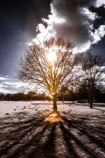 Baum in der Sonne by flylens