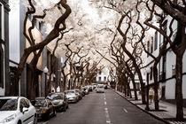 Schöne Straße mit Bäumen in infrarot von flylens