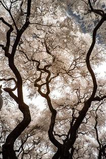 Strukturbäume in infrarot von flylens