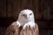 Adler mal anders von airde