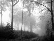 Nebelwald von flylens