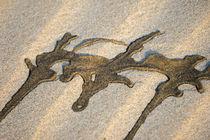 Zeichen im Sand by flylens
