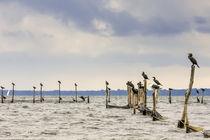 Maritime Vögel von flylens