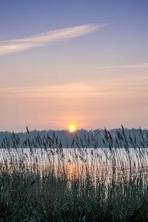 Sonnenuntergang im Schilf von flylens